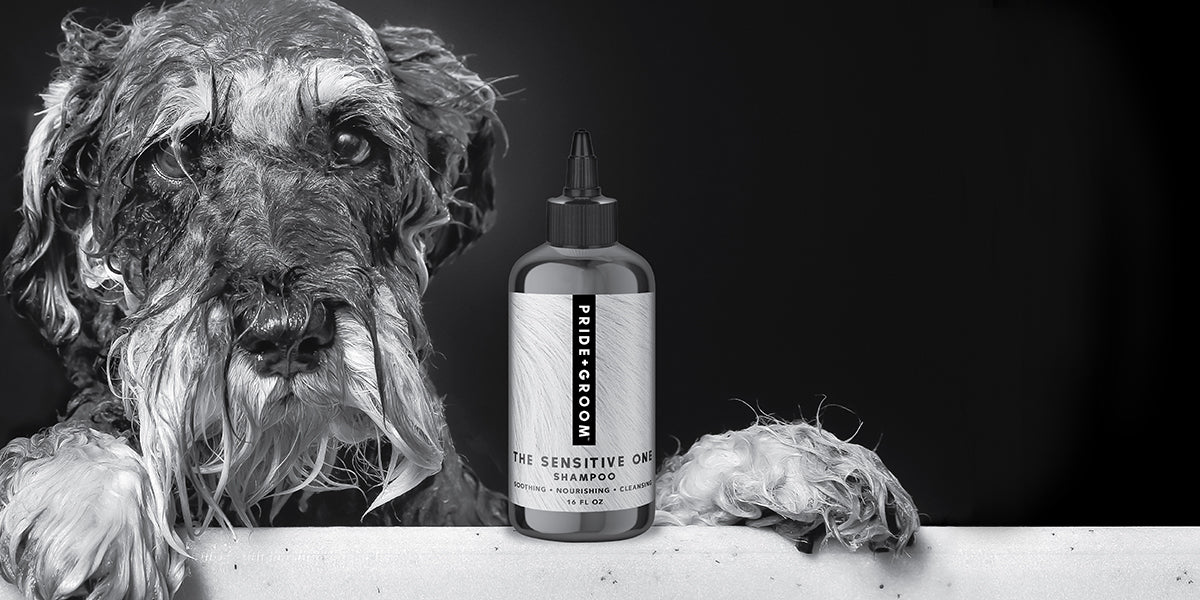 Give your dog the ultimate grooming experience.
