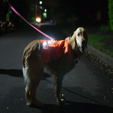 LED Rechargeable Reflective Dog Vest