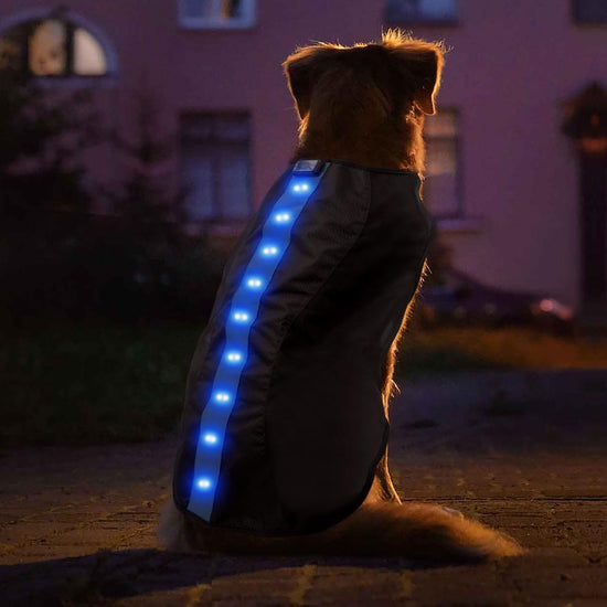 Medium Blue LED Rechargeable Dog Vest