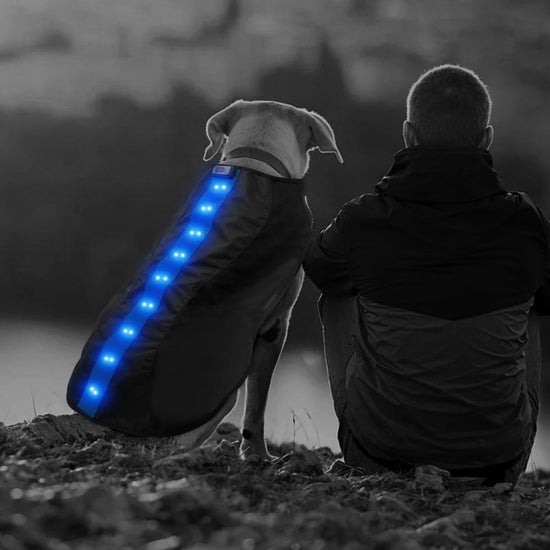 Small Blue LED Rechargeable Dog Vest
