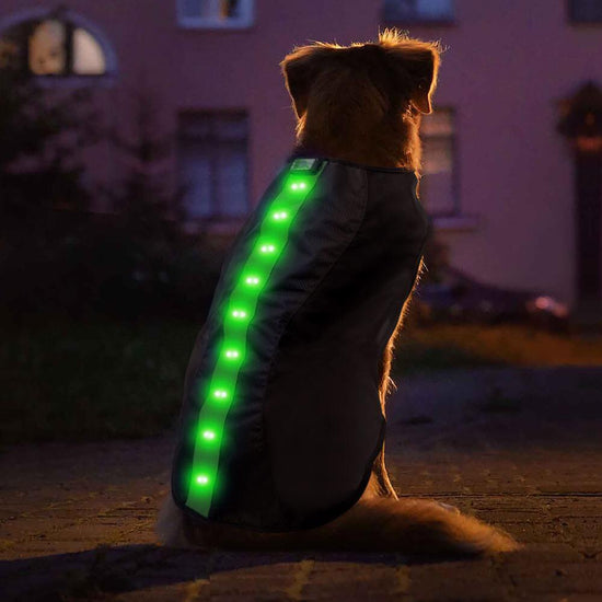 Medium Green LED Rechargeable Dog Vest
