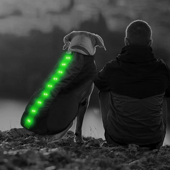 Small Green LED Rechargeable Dog Vest