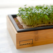 Hamama Microgreens Kit with Bamboo Frame