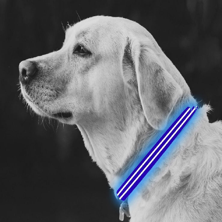 Medium Blue LED Rechargeable Dog Collar
