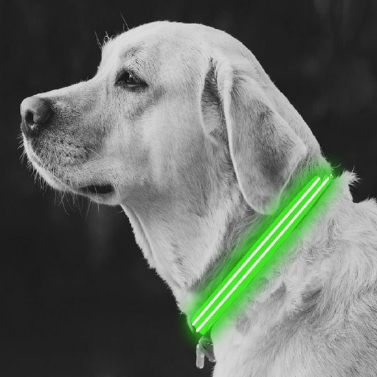 Large Green LED Rechargeable Dog Collar