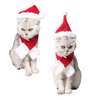 Art Your Cat Christmas set for your pet!