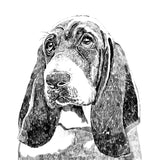 'Wilfred The Bassett Hound' Print