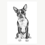 'Boston Terrier' A4 Print