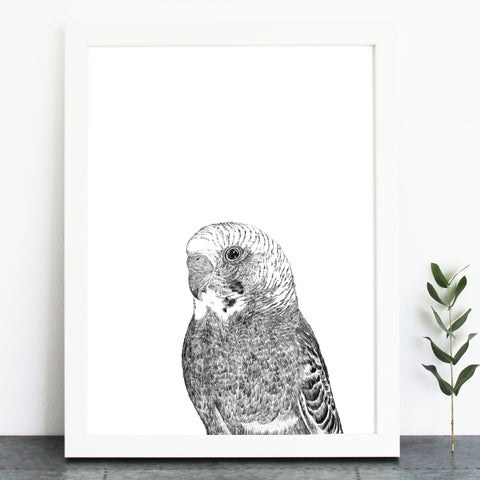 'Barry The Budgie' Print