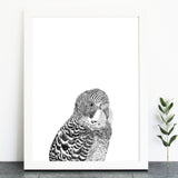 'Alan The Budgie' Print