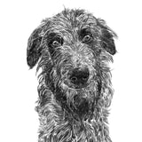 'Angus the Deerhound' Print