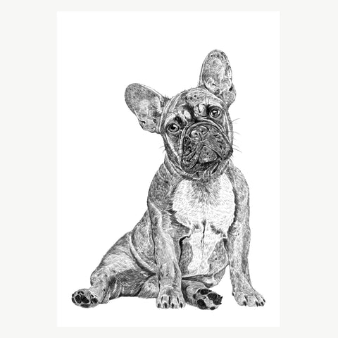 'French Bulldog' A4 Print