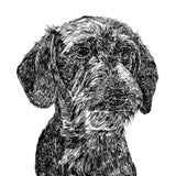 'Otto The Wire Haired Daschund' Print