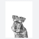 'Harold The Miniature Schnauzer' Print