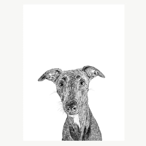 'Willow The Whippet' Print