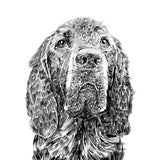 'Woody The Red Setter' Print
