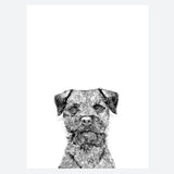 'Baxter The Border Terrier' Print
