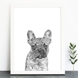 'Blue the French Bulldog' Print