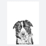 'Jack The Border Collie' Print