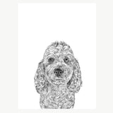 'Bear the Cockapoo' Print
