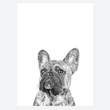'Frank The French Bulldog' Print