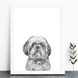 'George The Shih tzu' Print