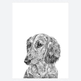 'Ronnie the Long Haired Daschund' Print