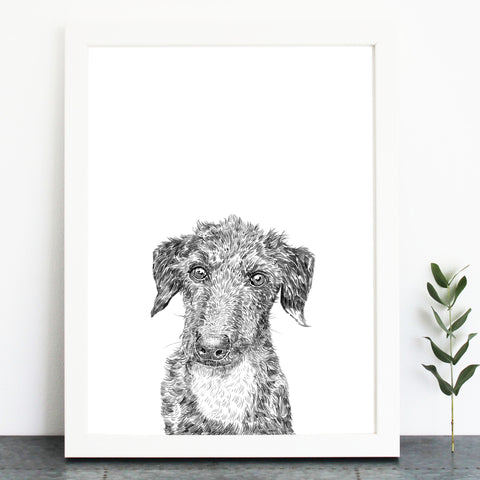 'Ernie The Lurcher' Print