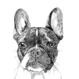 'Murphy The Boston Terrier' Print