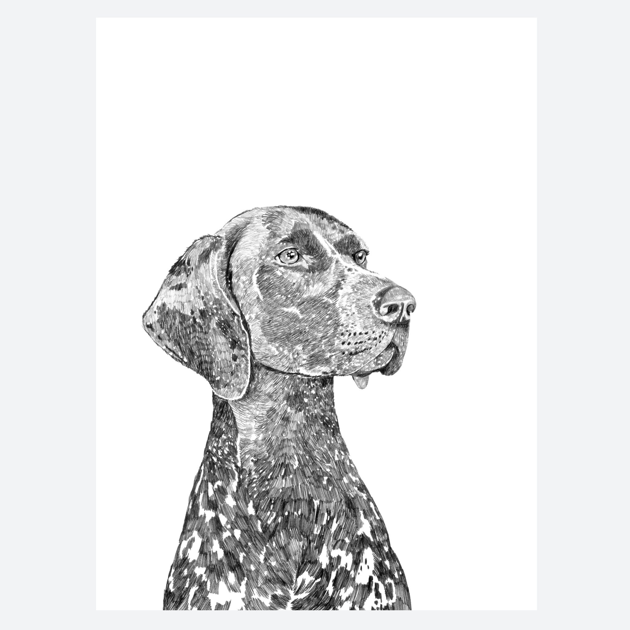 'Bert The German Pointer' Print