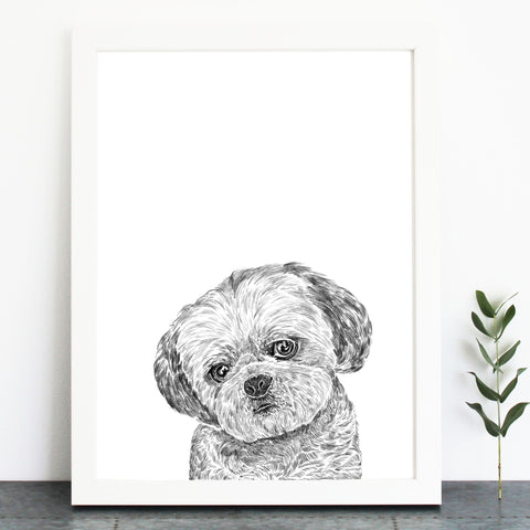 'Wicket The Shih tzu' Print