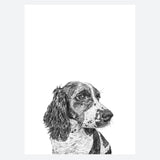 'Fred the Springer Spaniel' Print