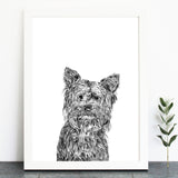 'Freddie The Yorkshire Terrier' Print