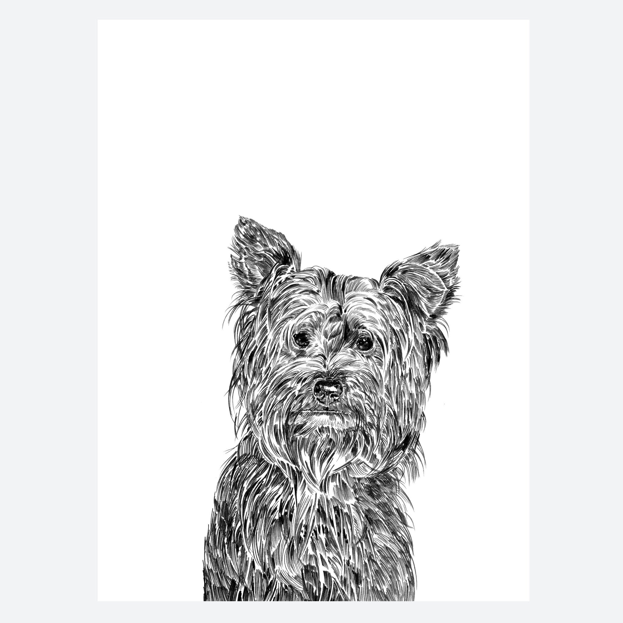 Yorkshire Terrier Dog Print