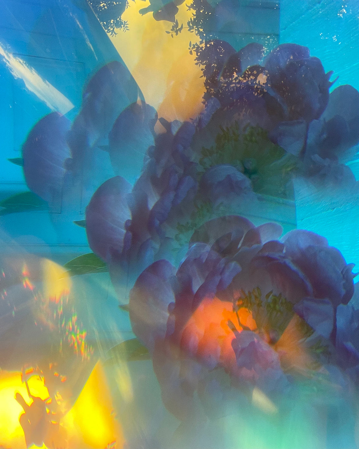 Crystal overlay to create distorted view of peonies and reflections of the sky