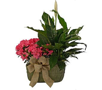 Double Plant Basket