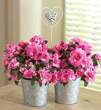 Blooms in Love for Mom-SOLD OUT!