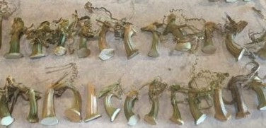 Coyote Gourd Stems - Ready for use / (12) to a Package!