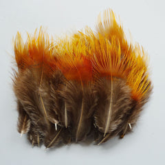 Golden Tip Pheasant Feathers - (12) for $4.99!