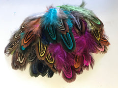 "Random Colors - Pheasant Feathers ""Brilliant Colors"""