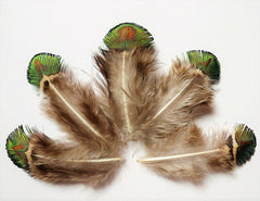 Green & Gold Fancy Feathers!  (10) pcs.