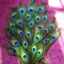 Peacock Feathers (12) Feathers ~ Real and Beautiful