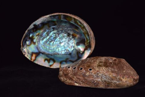 Beautiful Abalone Shells - Unique Colors!
