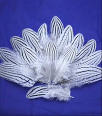 Zebra patterned Feathers - Fantastic Pattern!