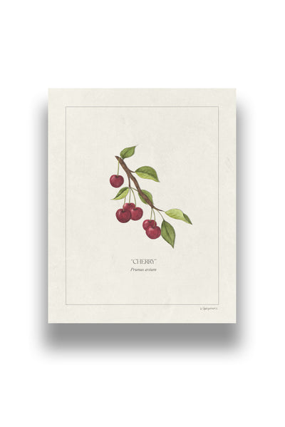 Botanical Cherries | Digital Print