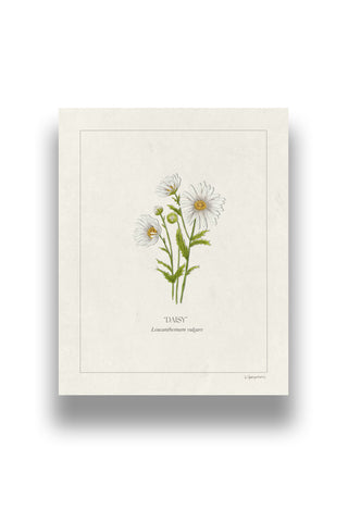 Botanical Daisies | Digital Print