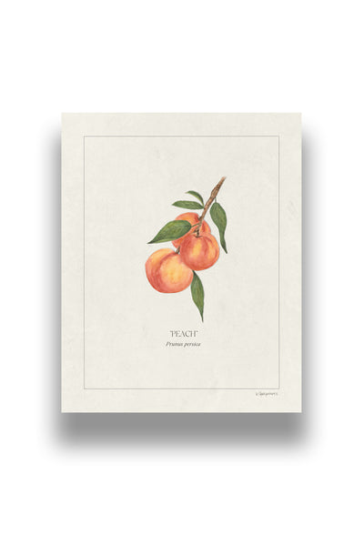 Botanical Peaches | Digital Print