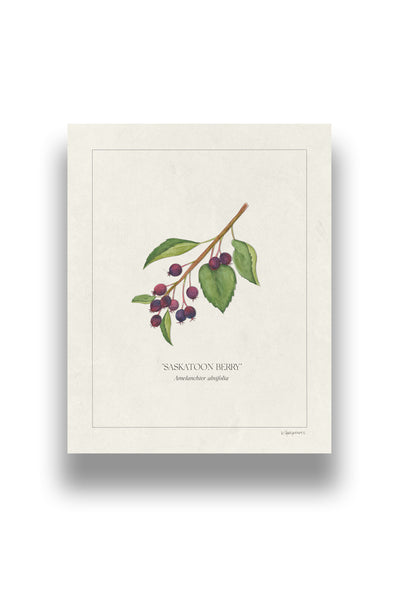 Botanical Saskatoon Berries | Digital Print
