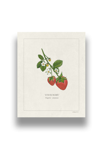 Botanical Strawberries | Digital Print