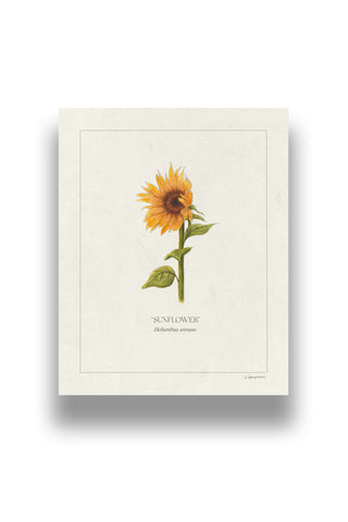 Botanical Sunflower | Digital Print